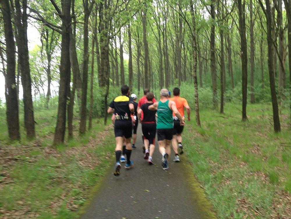 Door de bossen bij Zwiggelte.