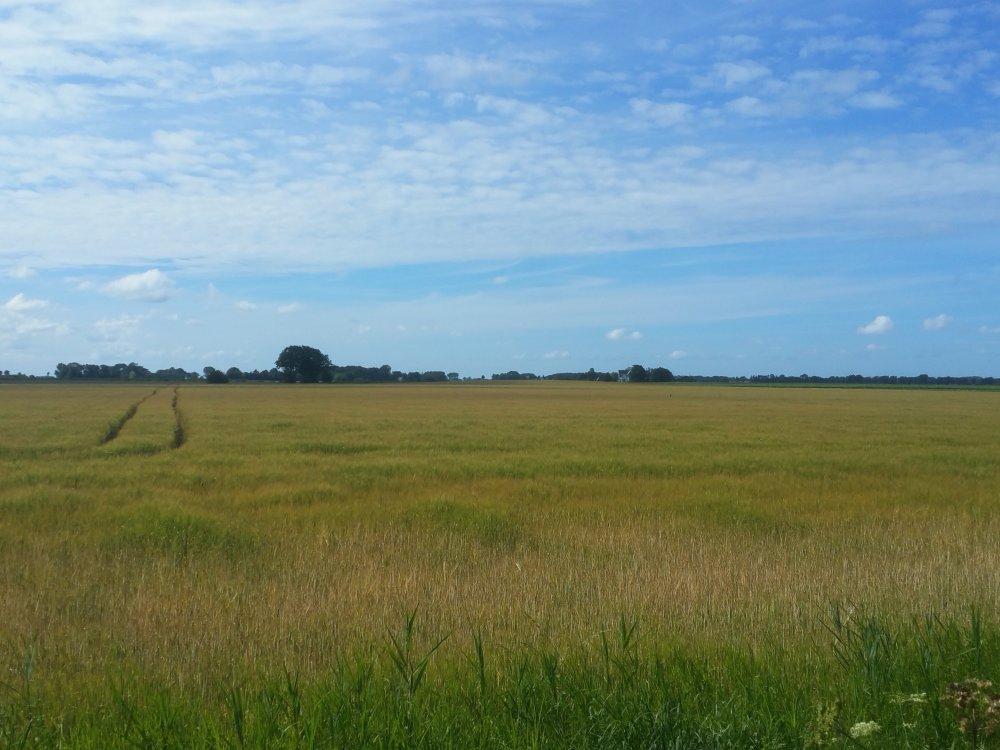 Uitgestrekte graanvelden.