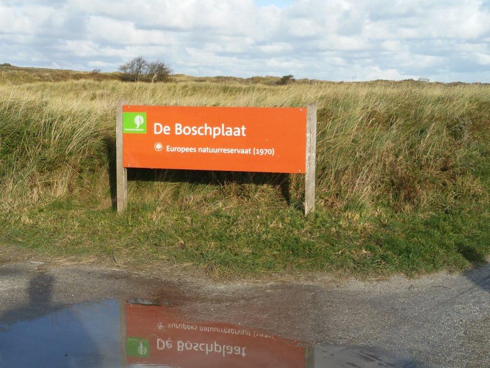De Boschplaat.